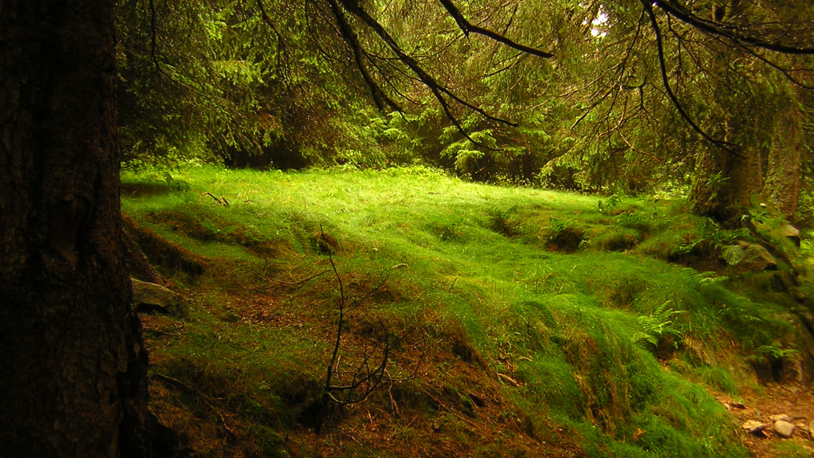 [:it]foresta[:]